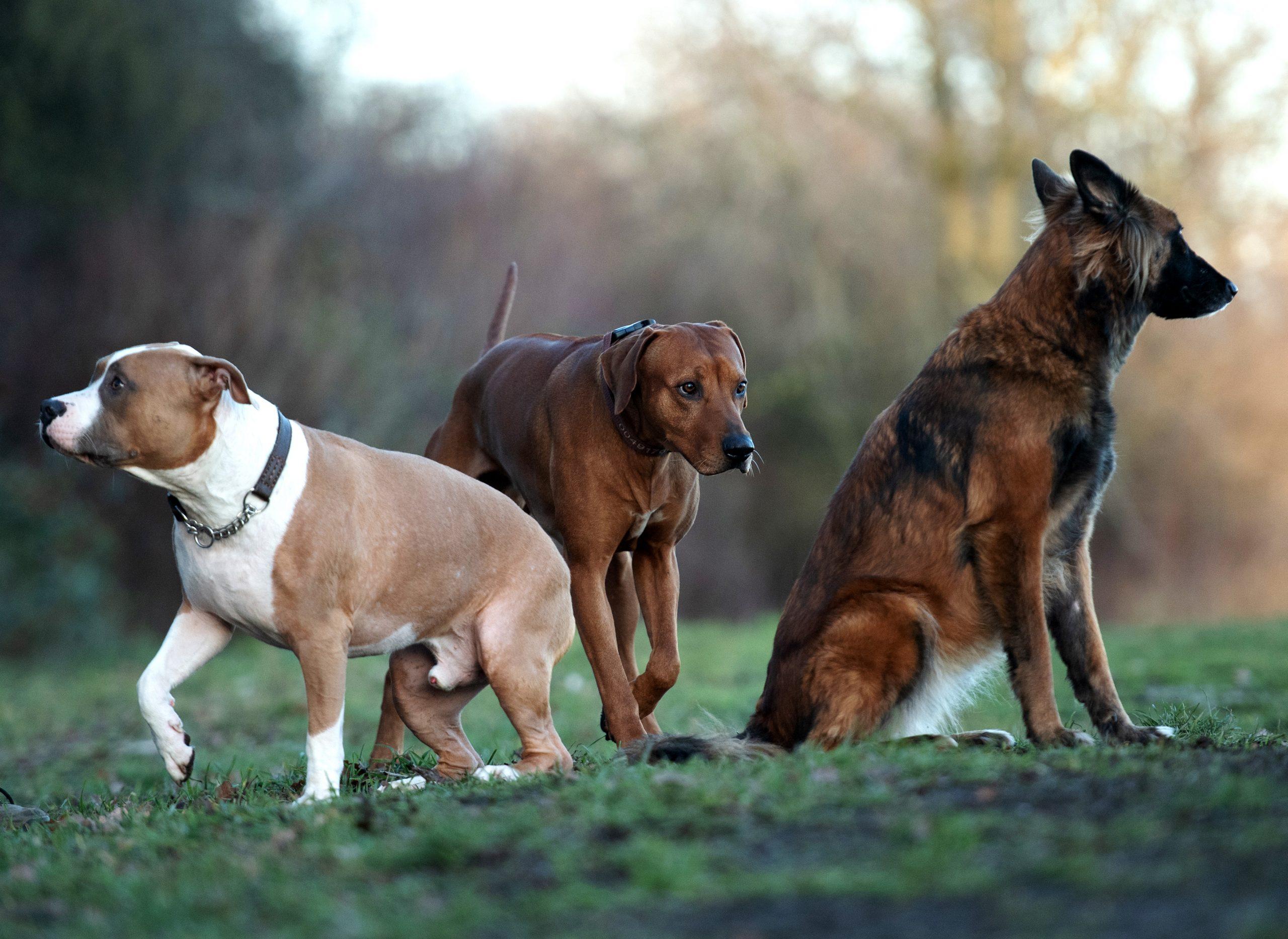 Schwierige Hunde